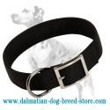 Everyday classic black nylon collar for Dalmatian