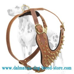 Top Notch Design of Spiked Leather Dog Harness for Dalmatian Breed