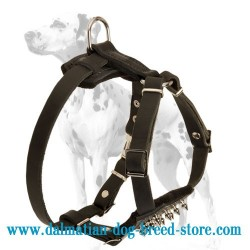 Spiked Dalmatian Puppy Dog Harness