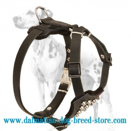 Studded Dalmatian Puppy Dog Harness