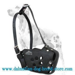 Strong Training Dalmatian Dog Muzzle with Holes on the Surface