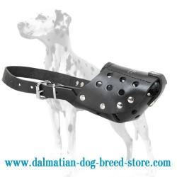 Top-Grade Dalmatian Dog Muzzle
