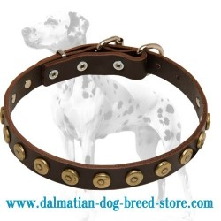 Fabulous Dalmatian Leather Dog Collar with Doted Circles