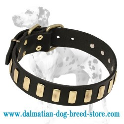Dalmatian Breed Stylish Leather Dog Collar with Vertical Brass Plates