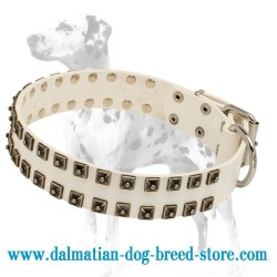 Best Design Dalmatian Dog Collar