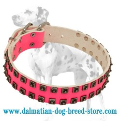 'Cosmo Lady' Dalmatian Dog Collar