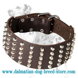 Extra Wide Dalmatian Dog Collar with 5 Rows of Studs