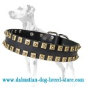 'Gift from Egypt' Dalmatian Dog Collar