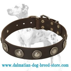 Gorgeous Wide Leather Dog Collar with Silver-like Conchos