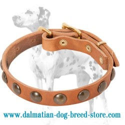 'Brass Circles' Dalmatian Dog Collar