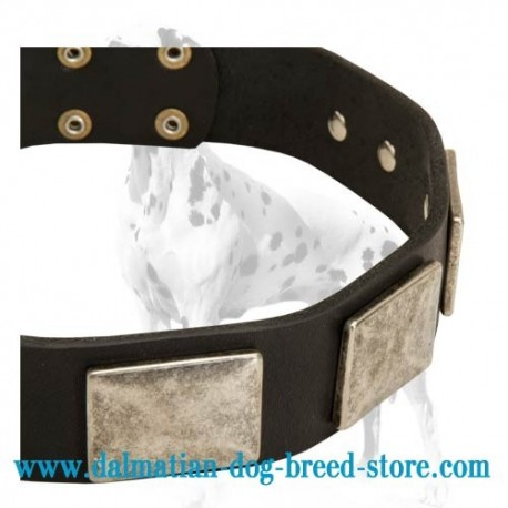 Fancy Leather Dalmatian Dog Collar with Vintage Plates