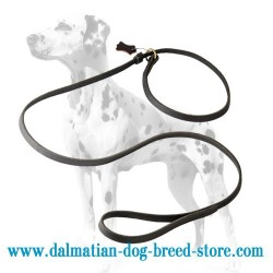 High-class Dalmatian Dog Leash / Choke Collar