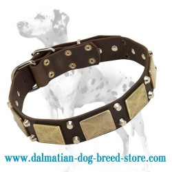 Dalmatian Leather Dog Collar with Massive Brass Plates and Nickel Pyramids