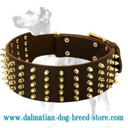High quality wide leather dog collar with 5 rows of rust-proof brass spikes