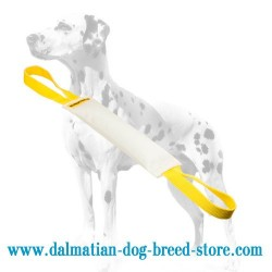 Long-Servicing Dalmatian Training Dog Bite Tug of Fire Hose