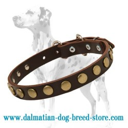 Leather Special Dog Collar with Brass Circles for Dalmatian breed