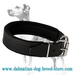Multifunctional padded leather dog collar for Dalmatian breed