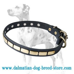 Leather Dalmatian Dog Collar with Cool Brass Plates