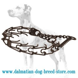 'Trendy Black' Dalmatian Dog Pinch Collar