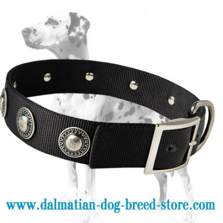Exclusively designed marvellous wide nylon dog collar for Dalmatian breed