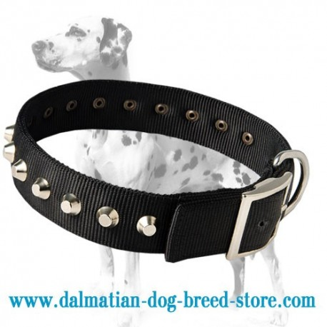 New Design Exclusive Nylon Dalmatian dog collar with Pyramids