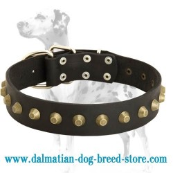 Super Fancy  Wide Leather Dog Collar Adorned with Brass Pyramids