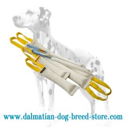 Large Dalmatian Training Set of Fire Hose Bite Tugs