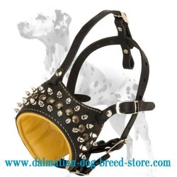 Leather dog collar with shiny studs and pyramids designed to fit Dalmatian