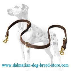 Multitasking Dalmatian Dog Leash