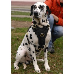 Posh Hand-crafted Padded Leather Dog Harness for Dalmatian breed