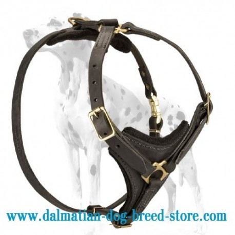 Dalmatian Deluxe leather dog harness for tracking, training and walking