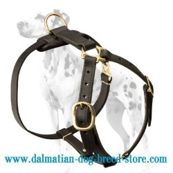 Dalmatian breed deluxe leather dog harness for tracking, training and walking