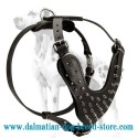 Elite Dalmatian Leather Spiked Harness