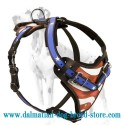 Leather Dog Harness for Dalmatian with little America on